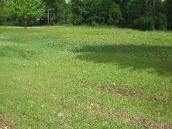 3.75 Acre Commercial Lot McComb pic 2